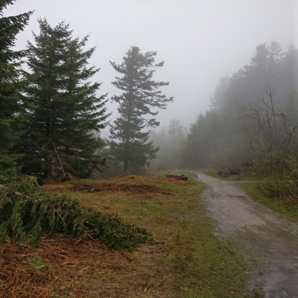 Black Forest the day after